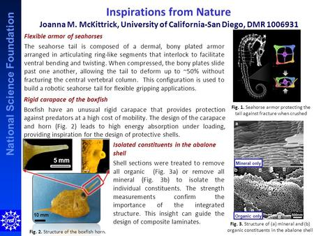 National Science Foundation Inspirations from Nature Joanna M. McKittrick, University of California-San Diego, DMR 1006931 Flexible armor of seahorses.