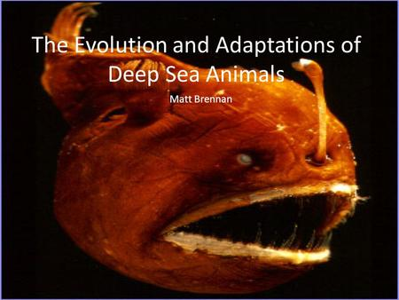 The Evolution and Adaptations of Deep Sea Animals Matt Brennan.