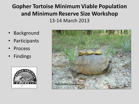 Gopher Tortoise Minimum Viable Population and Minimum Reserve Size Workshop 13-14 March 2013 Background Participants Process Findings Photo by Dirk J.