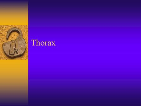 Thorax.