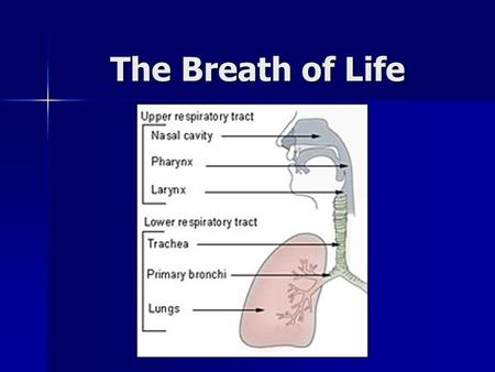 The Breath of Life.