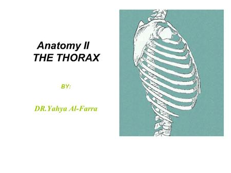 Anatomy II THE THORAX BY: DR.Yahya Al-Farra