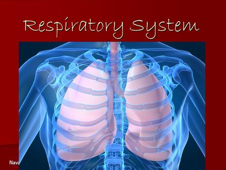 Respiratory System Navasota Junior High.