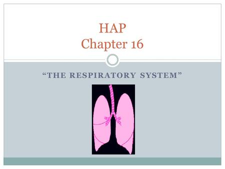 """THE RESPIRATORY SYSTEM"" HAP Chapter 16. Why breathe???"