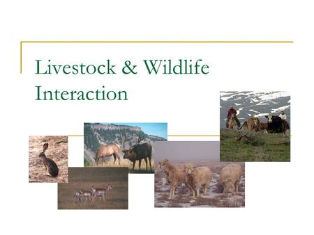 Livestock & Wildlife Interaction. Interactions NegativePositive It Depends on….?