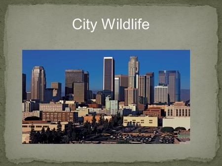 City Wildlife. The goals for this unit are to: Understand that wildlife does not just have to be in a jungle or a rural environment; it can be in a city,