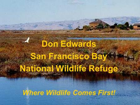 Don Edwards San Francisco Bay National Wildlife Refuge Where Wildlife Comes First!