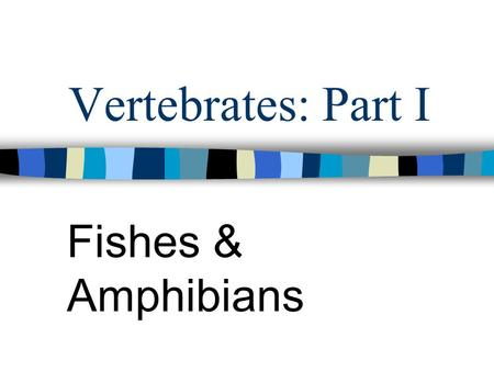 Vertebrates: Part I Fishes & Amphibians. Phylum Chordata Chordates: includes all the vertebrates Have 3 common characteristics: –Nerve Cord: hollow tube.