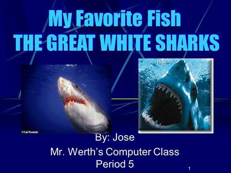 1 By: Jose Mr. Werth's Computer Class Period 5 My Favorite Fish THE GREAT WHITE SHARKS My Favorite Fish THE GREAT WHITE SHARKS.