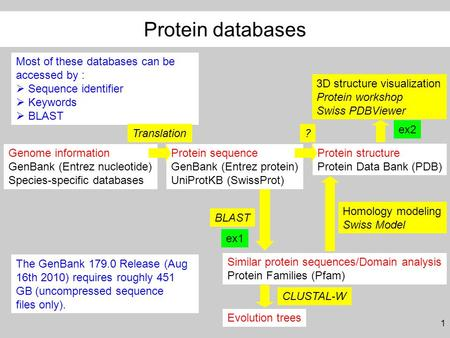 1 Genome information GenBank (Entrez nucleotide) Species-specific databases Protein sequence GenBank (Entrez protein) UniProtKB (SwissProt) Protein structure.