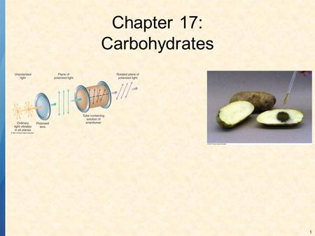 Chapter 17: Carbohydrates
