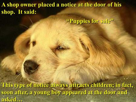 "A shop owner placed a notice at the door of his shop. It said: ""Puppies for sale"" This type of notice always attracts children; in fact, soon after, a."