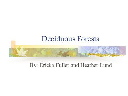 Deciduous Forests By: Ericka Fuller and Heather Lund.
