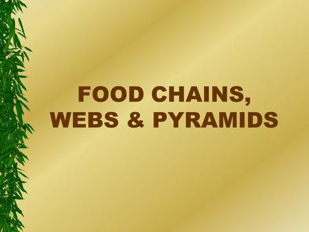 FOOD CHAINS, WEBS & PYRAMIDS. sun eclipse with palm the ultimate energy source.