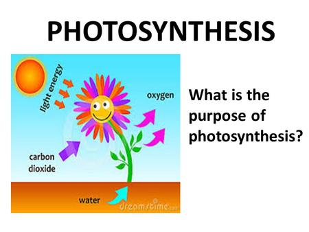<strong>PHOTOSYNTHESIS</strong> What is the purpose of <strong>photosynthesis</strong>?