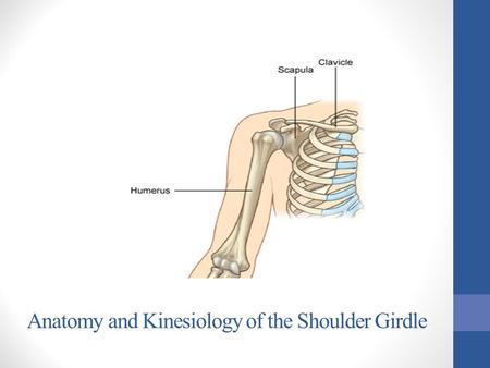 Anatomy and Kinesiology of the Shoulder Girdle