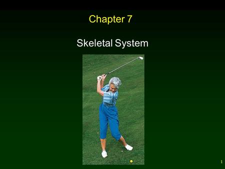 1 Chapter 7 Skeletal System. 2 Outline Tissues of the Skeletal System Bone Growth and Repair Bone Development Bone Repair Bones of the Skeleton – Bone.