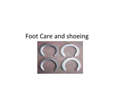 Foot Care and shoeing.