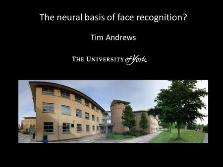 The neural basis of face recognition? Tim Andrews.