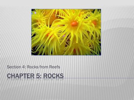 Section 4: Rocks from Reefs.  Structure of calcite (calcium carbonate - CaCO 3 ) skeletons built up by coral animals in warm, shallow ocean water.