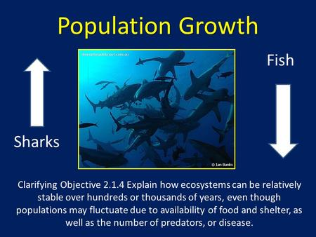 Population Growth Sharks Fish Clarifying Objective 2.1.4 Explain how ecosystems can be relatively stable over hundreds or thousands of years, even though.