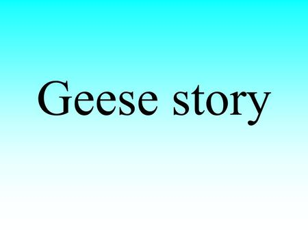 Geese story.