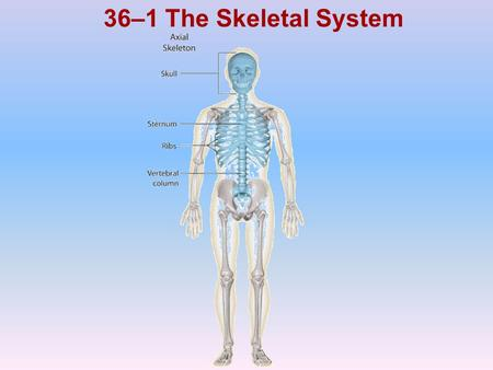 36–1 The Skeletal System Photo Credit: © Getty Images.