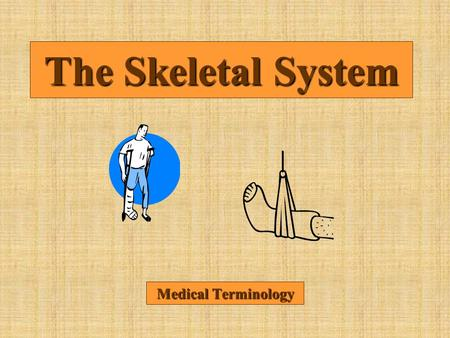 The Skeletal System Medical Terminology.