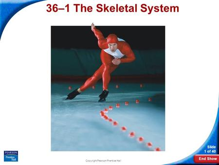 End Show Slide 1 of 40 Copyright Pearson Prentice Hall 36–1 The Skeletal System.