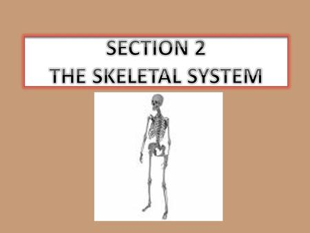 SECTION 2 THE SKELETAL SYSTEM