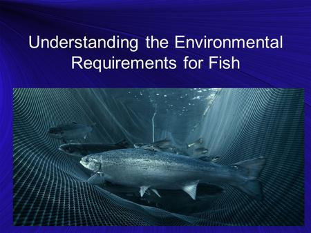 Understanding the Environmental Requirements for Fish.