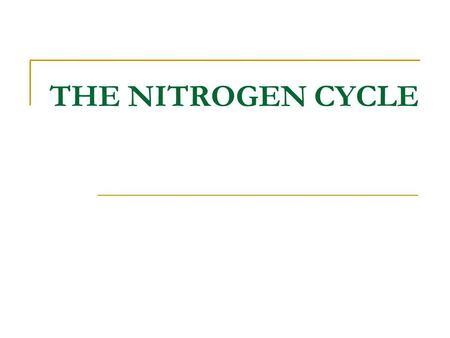 THE NITROGEN CYCLE. Nitrates are essential for plant growth Root uptake Nitrate NO 3 - Plant protein © 2008 Paul Billiet ODWSODWS.