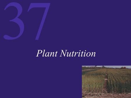 37 Plant Nutrition. 37 The Acquisition of Nutrients All living things need raw materials from the environment. These nutrients include carbon, hydrogen,