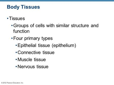 Body Tissues Tissues Groups of cells with similar structure and function Four primary types Epithelial tissue (epithelium) Connective tissue Muscle tissue.