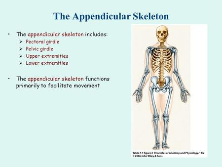 HUMAN ANATOMY The Appendicular Skeleton Ch ppt video online download