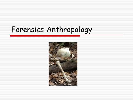 Forensics Anthropology. Generally speaking forensic anthropology is the examination of human skeletal remains for law enforcement agencies to determine.
