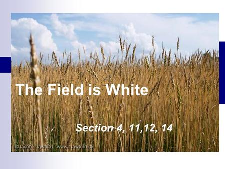 The Field is White Section 4, 11,12, 14. 1828- Two years before the organization of the Church Doctrine and Covenants 10:50-54 50 And thus they (Book.
