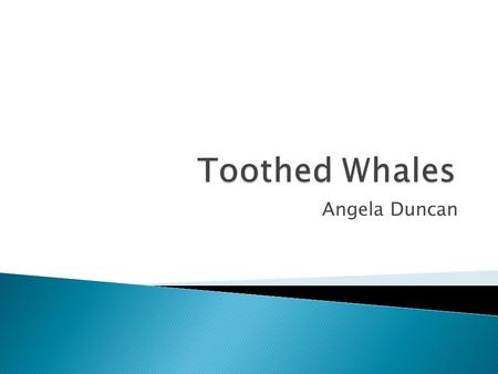 Angela Duncan.  General Facts about Toothed Whales  Diet  Examples of Species ◦ Sperm Whales ◦ Narwhals ◦ Belugas ◦ Orcas ◦ Dolphins ◦ Porpoises.
