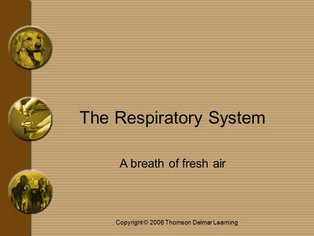 Copyright © 2006 Thomson Delmar Learning The Respiratory System A breath of fresh air.