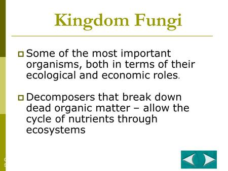 Kingdom Fungi  Some of the most important organisms, both in terms of their ecological and economic roles.  Decomposers that break down dead organic.