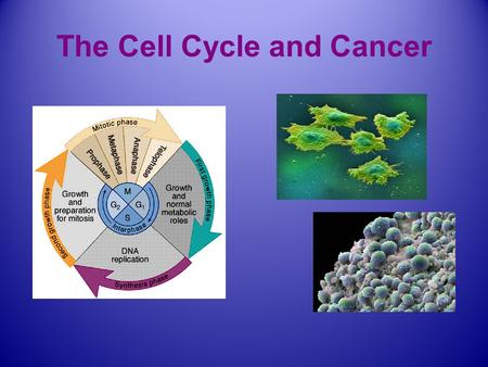 The Cell Cycle and Cancer. Cell signaling: chemical communication between cells. Click on above to go to animation second chemical response inside the.