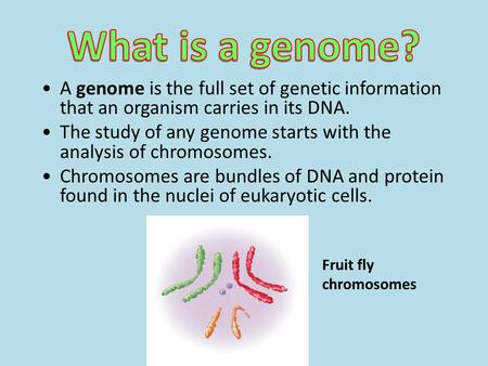 What is a genome? A genome is the full set of genetic information that an organism carries in its DNA. The study of any genome starts with the analysis.