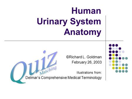 Human Urinary System Anatomy ©Richard L. Goldman February 26, 2003 Illustrations from: Delmar's Comprehensive Medical Terminology.
