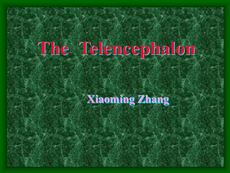 The Telencephalon Xiaoming Zhang. The Telencephalon  External features:  2 Cerebral hemispheres (separated by longitudinal cerebral fissure)  Transverse.