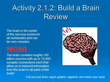 Activity 2.1.2: Build a Brain Review
