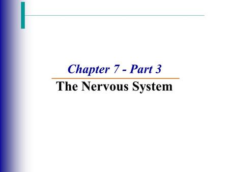 Chapter 7 - Part 3 The Nervous System. The Reflex Arc  Reflex – rapid, predictable, and involuntary responses to stimuli  Much like a one-way street.