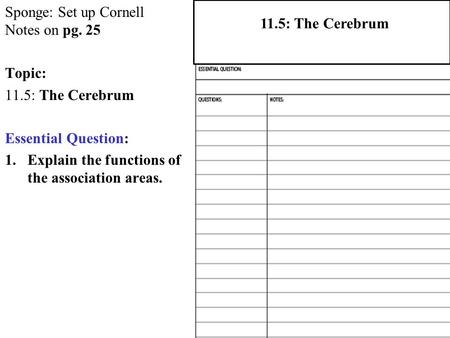 Sponge: Set up Cornell Notes on pg. 25 Topic: 11.5: The Cerebrum Essential Question: 1.Explain the functions of the association areas. 2.1 Atoms, Ions,