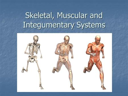 Skeletal, Muscular and Integumentary Systems