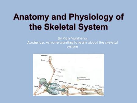 By Rich Mursheno Audience: Anyone wanting to learn about the skeletal system.
