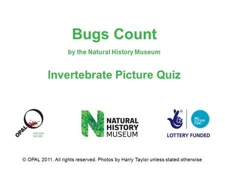 Bugs Count by the Natural History Museum Invertebrate Picture Quiz © OPAL 2011. All rights reserved. Photos by Harry Taylor unless stated otherwise.